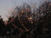 franklin-ma-light-common17.jpg