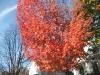 franklin-ma-fall-23.jpg
