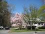 Franklin Photos - Spring