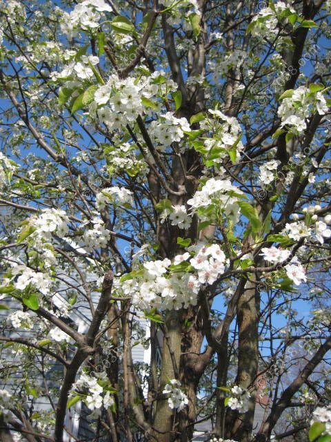 franklin-ma-spring-19.jpg