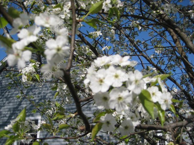 franklin-ma-spring-20.jpg