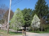 franklin-ma-spring-13.jpg