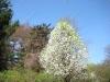 franklin-ma-spring-14.jpg