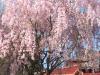 franklin-ma-spring-18.jpg