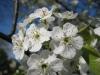franklin-ma-spring-21.jpg