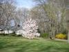 franklin-ma-spring-24.jpg