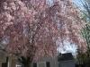 franklin-ma-spring-27.jpg