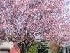 franklin-ma-spring-31.jpg