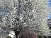 franklin-ma-spring-32.jpg