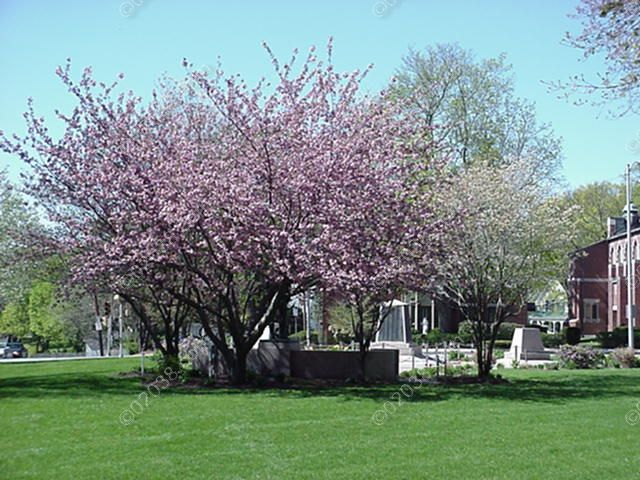 franklin-ma-town-common-spring-1.jpg