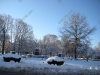 franklin-ma-winter-11.jpg
