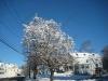 franklin-ma-winter-25.jpg