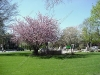 franklin-ma-town-common-spring-2.jpg
