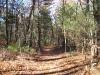 broad-trail_wm.jpg