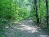 broad-trail.jpg