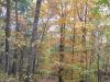 fall-foliage_wm.jpg