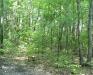 peaceful-woods_wm.jpg