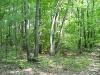 woods_wm.jpg