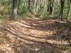 trail_wm.jpg