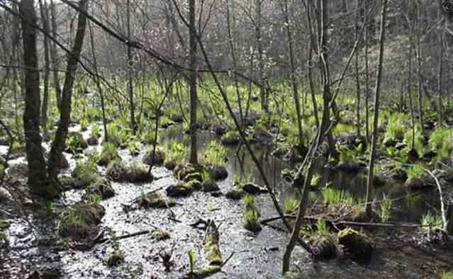 early-spring-on-the-trunk-line_wm.jpg