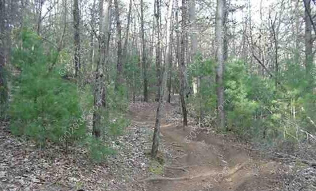 trail-off-trunk-line_wm.jpg