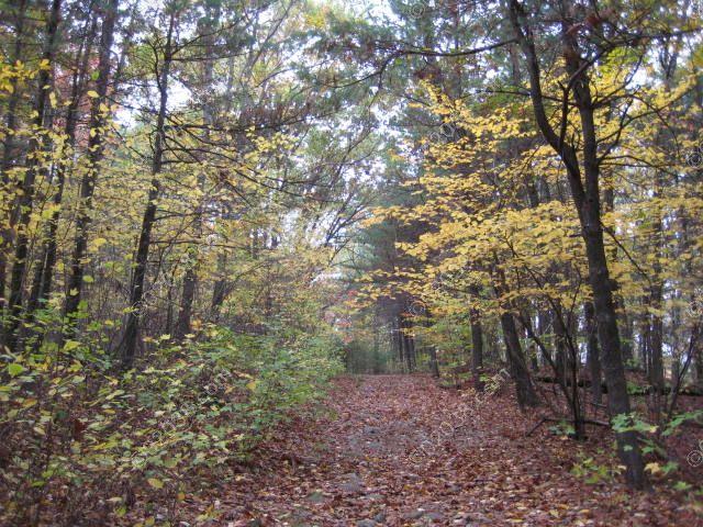 broad-trail