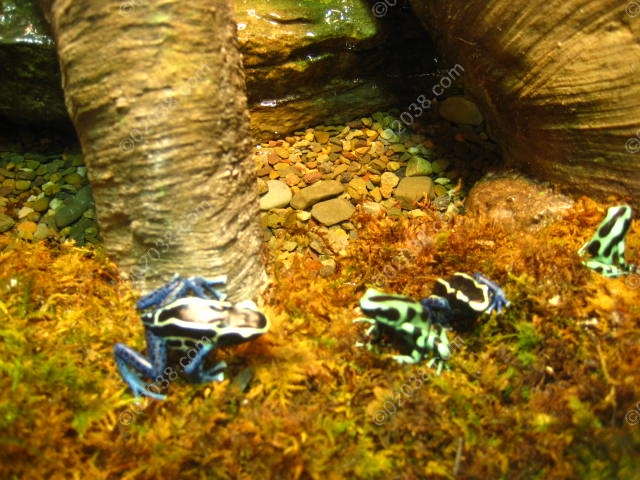 boston-museum-science-frogs