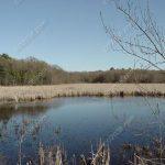 Beaver Pond Franklin MA