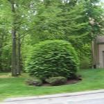 Forge Hill Condos Franklin MA - greenery